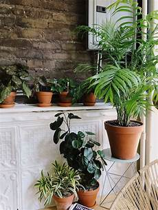 Plant Wall Lighting Caring For Indoor Plants In Low Light Conditions