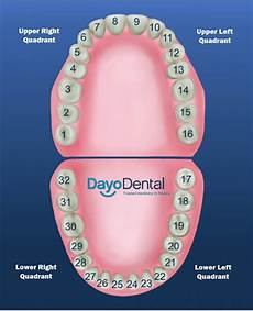 Dental Tooth Number Chart Teeth Numbers And Names Human Teeth Chart