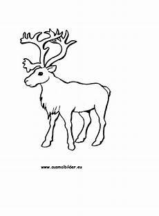 Malvorlagen Rentier Pdf Rudolph Reindeer Coloring Pages