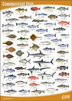 Seafood Chart Amazon Com Seafood Wall Chart Set Of 10 Office Products