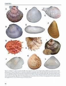 Shellfish Chart Seashell Identification Shell Identification Chart Book
