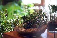 Best Plants For Low Light Terrarium Top Ten Low Light Terrarium Plants Pistils Nursery