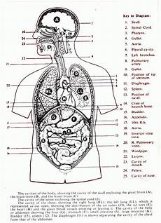 Body Regions Clipart For Ap Clipground
