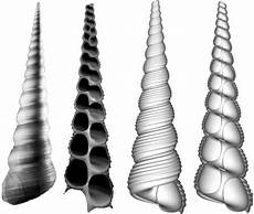 Biomimesis And The Geometric Definition Of Shell