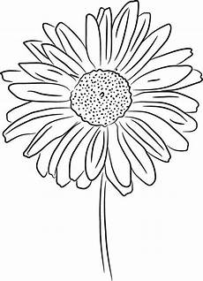 Drawings Of A Flower Daisy Line Drawing Daisy Line Drawing Photo Daisy Jpg