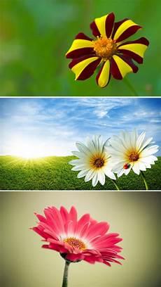 Flower Wallpaper For Home Screen by App Shopper Beautiful Flowers Wallpapers Best Flowers