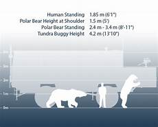 polar size chart tundra buggy 174 adventures