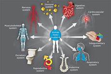11 Body Systems The 11 Body Systems Description
