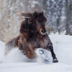 pin barbara rathmanner auf pferde im schnee pferde