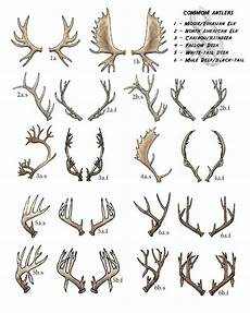 Deer Antler Age Chart 10 Best Images About Deer Skulls On Pinterest The Guys