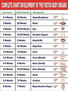 Fetal Growth Chart During Pregnancy Pregnancy Chart Maatriyoga