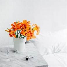 flower wallpapers for hd flower wallpapers hd unsplash