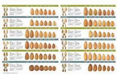 Almond Variety Chart California Almond Varieties True California