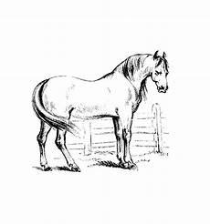 pferde 00013 gratis malvorlage in pferde tiere ausmalen