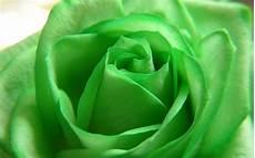 desktop green flower wallpaper 30 hd green wallpapers
