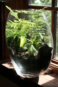 Best Plants For Low Light Terrarium Top Ten Low Light Terrarium Plants Terrarium Plants