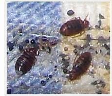 bye bye pests insect services pest vermin