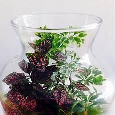 Best Plants For Low Light Terrarium 1000 Images About Greenhouses Amp Terrariums On Pinterest