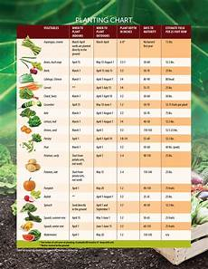 Sow What Helpful Tips On When To Start Planting Seeds In