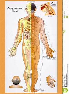 Chinese Body Chart Traditional Chinese Acupuncture Chart Editorial Stock