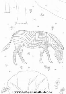 zebra ausmalbild malvorlagen tieren kostenlos zum