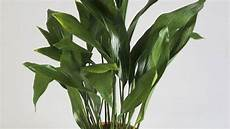 Low Light Stem Plants The 12 Best Low Light Houseplants For Darker Homes And