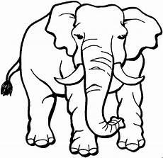 elefant vorne 2 ausmalbild malvorlage tiere