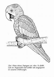 Malvorlage Vogel Kostenlos Ausmalbilder Schwer Vogel Ausmalbilder Ausmalen