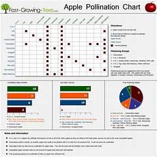 Apple Tree Pollination Chart Apple Trees Infographics Showcase