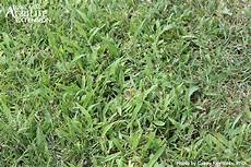 Control Crab Grass Want To Control Crabgrass Time To Apply A Preemergent