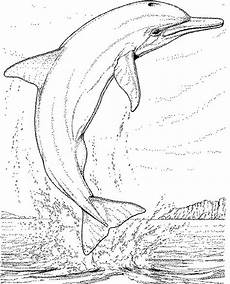 Malvorlagen Delphine Delphin Malvorlagen Malvorlagen1001 De
