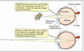 Image result for acomodqción