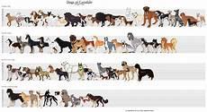 Dog Name Chart Dog Breed Dog Breed Chart