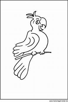 malvorlage papagei ausmalbilder zum ausdrucken