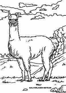 Ausmalbilder Tiere Lama Malvorlage Alpaka Lama Tiere Mit Bildern