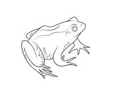 Frosch Malvorlagen Jogja Ausmalbilder Fr 246 Sche Malvorlagen Kostenlos Zum Ausdrucken