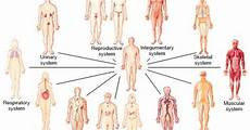 11 Body Systems Our Body S Instinctive Organ Systems Guiding Instincts