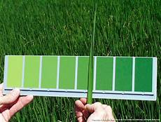 Plant Color Chart The Color Green Rice Farming