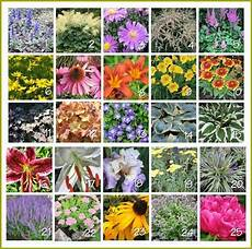 Plant Color Chart A Guide To Northeastern Gardening Landscape Perennials