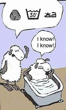 sheep taking a bath knitting yarn is