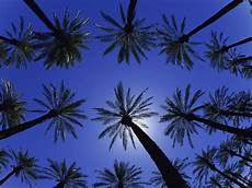 Tree Designs Tumblr Palm Trees Wallpapers Wallpaper Cave