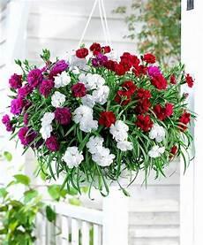 fiori da vaso perenni fiori da vaso fiorista fiori per vaso