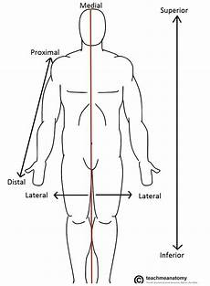 Anatomic Chart Anatomical Terms Of Location Anterior Posterior