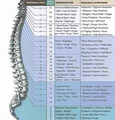 Chart Of Nerves In Back Spinal Nerve Chart The Spine Clinic Dr Anthony Caruso