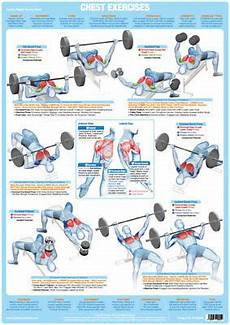 Weight Lifting Exercise Chart Chest Muscles Weight Lifting Poster Body Building Chart Ebay