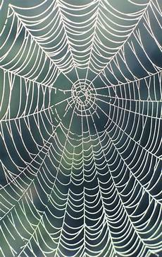 web bid how to make a big spider web ehow