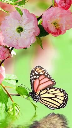 iphone lock screen butterfly wallpaper butterfly wallpaper for android pixelstalk net