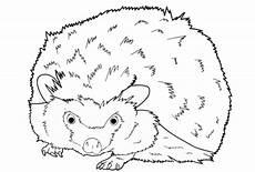 Malvorlagen Gratis Update 28 Malvorlagen Gratis Tiere Igel Farbung