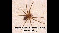 Light Brown Spider Florida Spider Control Florida Reynolds Pest Management Inc