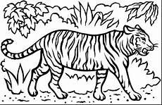 Malvorlagen Kostenlos Tiger Tiger Print Drawing At Getdrawings Free